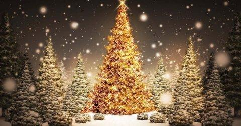 41164dc088_1448275643_In-dit-tuincentrum-word-je-gek-als-je-niet-van-Kerstmis-houdt__shre